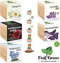 Ecocube Blumen-Set Mit 5 Sorten – 25% Sparen Im