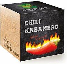 Ecocube Chili Habanero, Feurig Scharf, Nachhaltige
