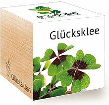 Ecocube Glücksklee, Nachhaltige Geschenkidee