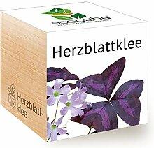 Ecocube Herzblattklee/ Love Plant, Nachhaltige