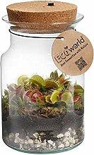 Ecoworld Corky Glass - Fleischfressende Pflanze im