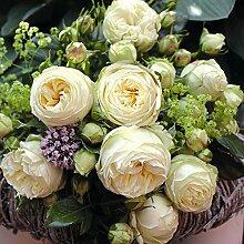 Edelrose`Wedding Piano®´
