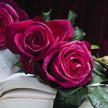 Edelrose Wolfgang von Goethe in purpur-pink -