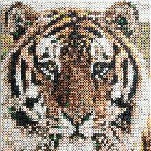 efco Foto Perlen Bead by Zahlen Tiger mit