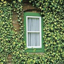 Efeu 'Goldherz' - Hedera helix im Container - Immergrüne, robuste Pflanze zur Bodenbegrünung oder als Kletterpflanze - Top Qualität von Garten Schlüter