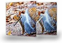 Eichhörnchen - Moderne Wanduhr mit Fotodruck auf Polycarbonat   Fotouhr Bilderuhr Motivuhr Küchenuhr modern hochwertig Quarz   Variante:30 cm x 30 cm mit weißen Zeigern
