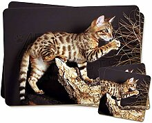 EIN Gorgeopus Bengal Kitten Zwillings
