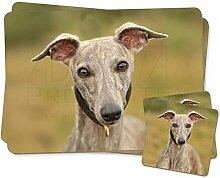 Ein herrliches Whippet Hund Zwillings