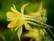 Eingemachte Blumensamen Aquilegia viridiflora,