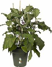 Elho Green Basics Anzuchttopf 40 - Growpot -