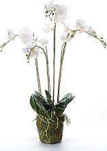 Emerald Kunstpflanze Phalaenopsis mit Moos Weiß