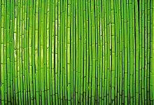 empireposter Foto-Tapete - Bamboo Wall - Größe