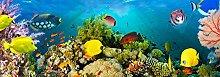 empireposter Sea Corals - Vlies Foto-Tapete