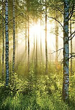 empireposter Wald im Herbst Foto-Tapete 2-teilig -