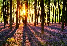 empireposter Woodland at Dawn - Vlies Foto-Tapete