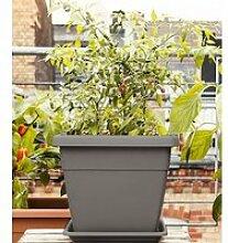 EMSA® 'My City Garden' Blumenkübel