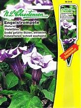 Engelstrompete Violettblau Datura Staude