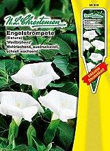 Engelstrompete Weissblühend (Portion inkl.