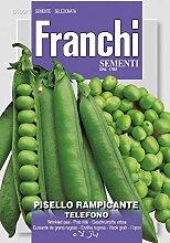 Erbsensamen - Erbse Rampicante Telefono von Franchi Sementi