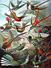 Ernst Haeckel Accent Fliesenbild, für