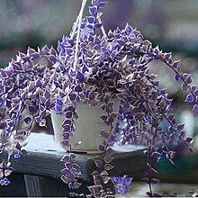 Eroihe Seltene Ivy Blumensamen Garten Topf