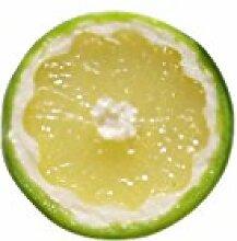 ERRO Magnet Limonenscheibe, Limone. Tolle