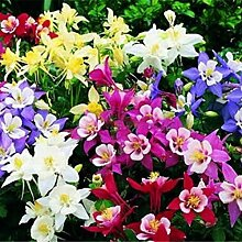 ESHOO Akelei Samen Wildflower Garden Flower