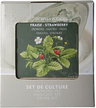Esschert Design B3300 Anzucht-Set Erdbeere