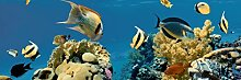 estilker Aquarium 3Dekoration aus Keramik mit Digitaldruck