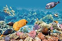 estilker compo-aquarium Dekoration aus Keramik mit Digitaldruck, Set 2-teilig