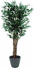 Euro Palms 82506126 Ficus-Benjamini Multi-Stamm,