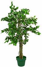 EUROPALMS 82506125 Ficus-Benjamini Multi-Stamm,