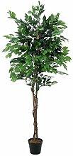 EUROPALMS 82506127 Ficus-Benjamini Multi-Stamm,