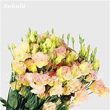 Eustoma Samen Bonsai Mixed Perennial Blumensamen