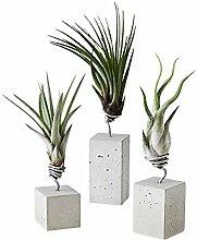 EVRGREEN | Luftpflanzen Set Tischdeko Beton grau | Dekoration für drinnen & im Garten