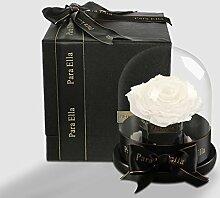 Ewige blume geschenk-box Das glas live rosen
