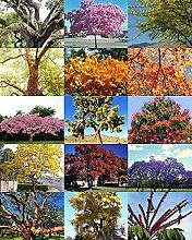 Exotische Bäume MIX, seltene Blume Pflanze Wüste