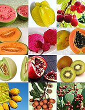 Exotische Früchte MIX süßen essbaren Pflanze