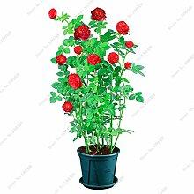 Exotische Rosas / Rose Samen Staudengarten Bonsai Blume Pflanze, Blumentöpfe Pflanz Dekorative Landschaftsbau 120 PC / Beutel 5
