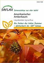 Exotische Samen - Amerikanischer Amberbaum von Saflax