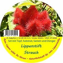 Exotische Samen - Garden to Go Lippenstiftstrauch