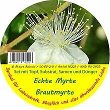 Exotische Samen - Garden to Go Myrte von Saflax