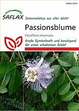 Exotische Samen - Passionsblume von Saflax