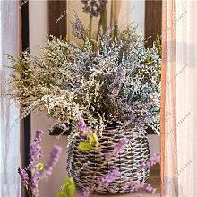 Exotische Valentinstag Grass Seed Heirloom Bonsai Pflanze, die Keimungsrate 95% Bunte Blumen-Samen-Wohnzimmer-Dekor-100 PC 4