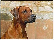 FAJRO Hund Rhodesian Ridgeback Teppich für