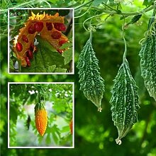 Farm 25 PCS / Bag Balsam Pear Seed bitterer Kürbis-Samen Bitter Melon Momordica Charantia F58
