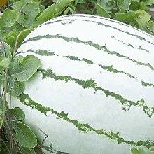 Farmerly 40 Dixie Queen Watermelon Seeds