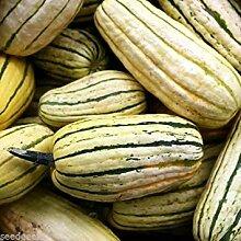 Farmerly Delicata Winter Squash Heirloom Seeds