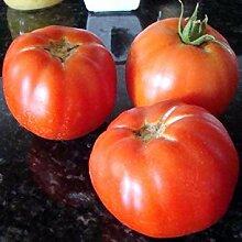 Farmerly Marglobe Tomato Heirloom Seeds