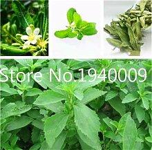 FARMERLY Samen Paket: 100 Stück Bonsai Stevia